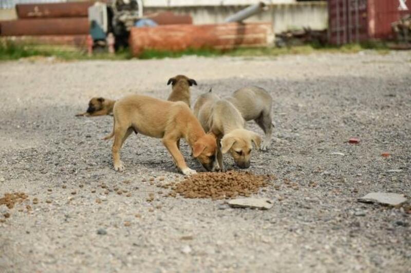 Adana'da belediye ekipleri 500 noktada sokak hayvanlarını besliyor