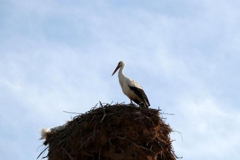 Kuş gözleminde Burdur ve Antalya ilk 10'da