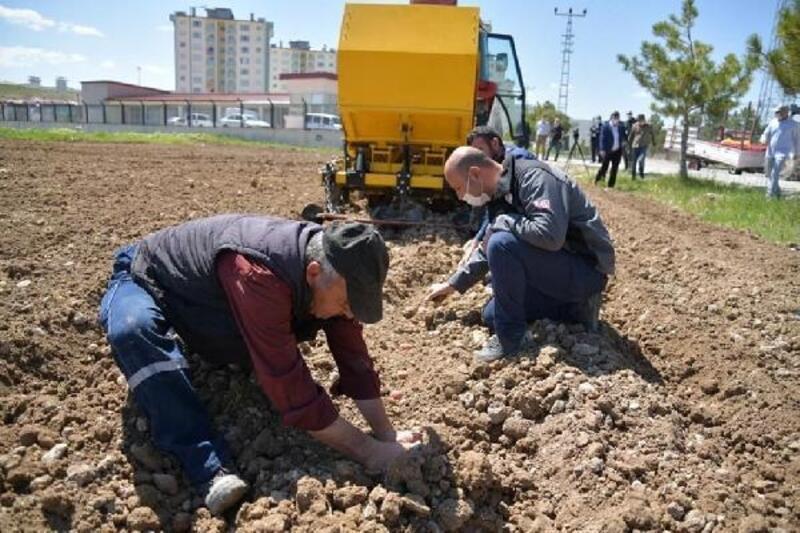 Kayseri'de boş araziye patates tohumu ekildi