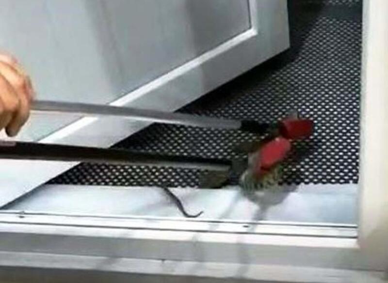 Eve giren yılanı itfaiye erleri çıkarttı