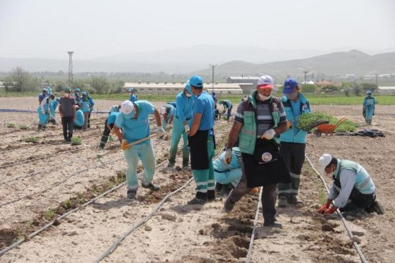 Kocasinan'da 70 bin fide toprakla buluştu