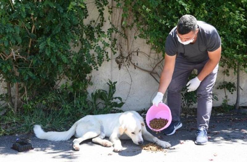 Konyaaltı, sokak canlarına 5.5 ton mama ulaştırdı