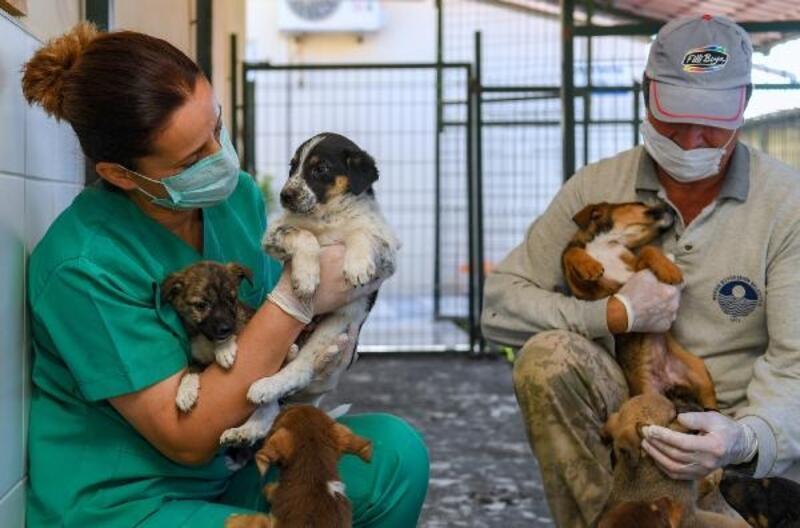 8 bin kilogram mama kedi ve köpeklere ulaştırıldı