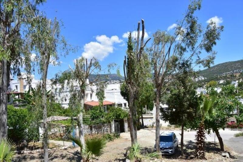 Bodrum'da vatandaşlardan 'ağaç kıyımı' tepkisi