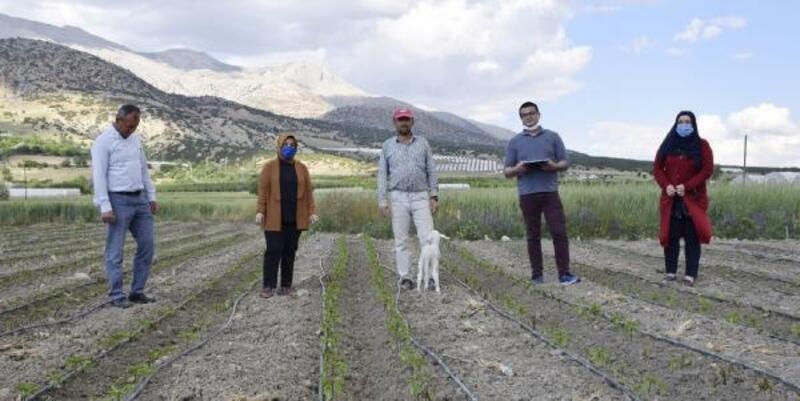 Elmalı'da tarım arazilerini don vurdu