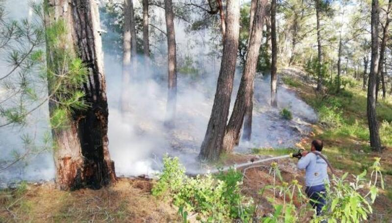 Yıldırım, orman yangını çıkardı
