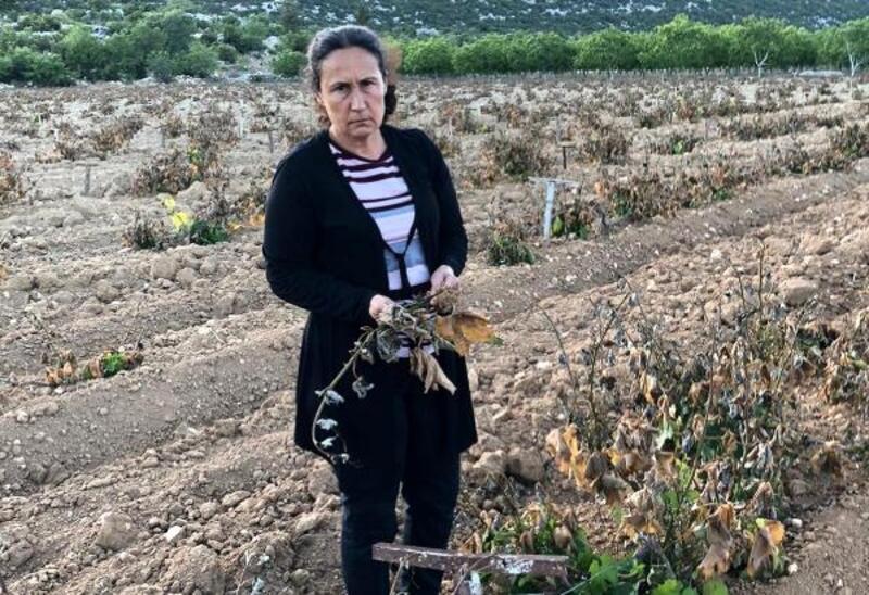 Mersin'de üzüm bağları ve elma bahçelerini don vurdu