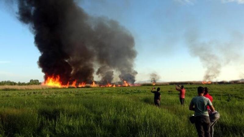 Erciş'teki birçok kuş türüne ev sahipliği yazan sazlık alan yandı