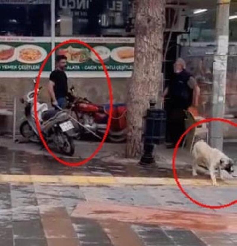 Köpeği fırça sapıyla dövdü, kasabın üzerine bıçakla yürüdü