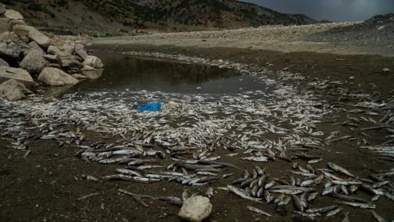 Gölbaşı'nda balık ölümleri tedirginlik yarattı