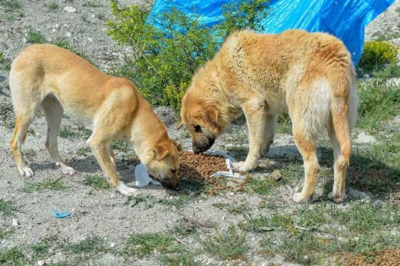 Başkent'te sokak hayvanlarına 461 ton mama desteği sağlandı