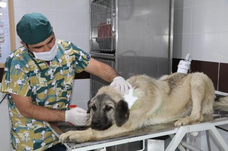 Çankırı'da sokak hayvanlarına 630 kilogram mama