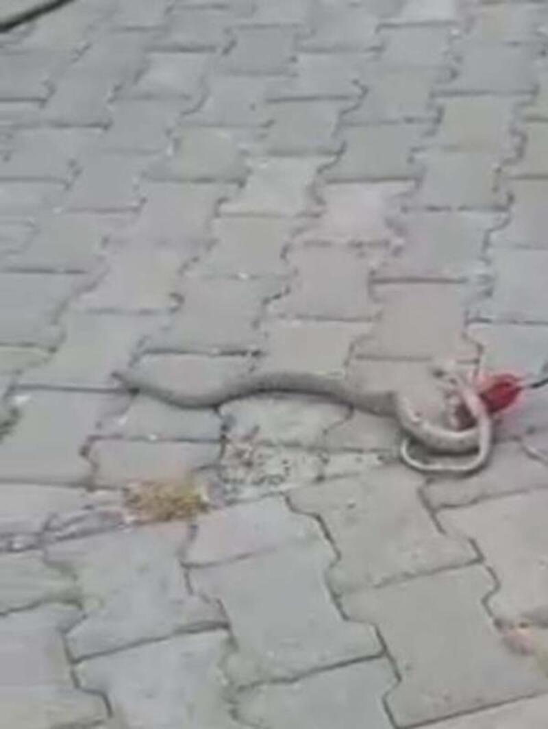 Adıyaman'da klima borusundaki yılanı itfaiye yakaladı