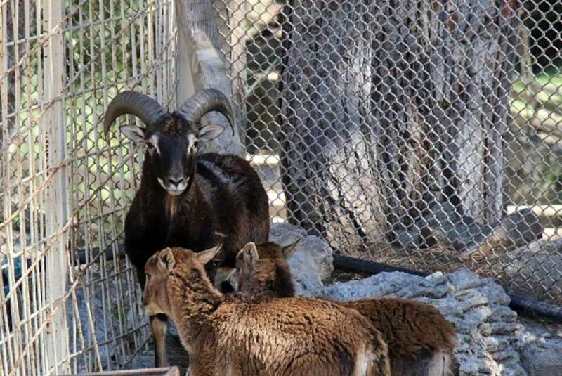 Hayvanat bahçesi yeni türleri ağırlıyor