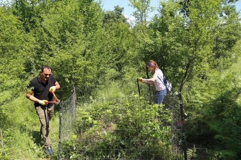 Kırmızı orman karıncaları yuvaları etrafı çevrilerek koruma altına alınıyor