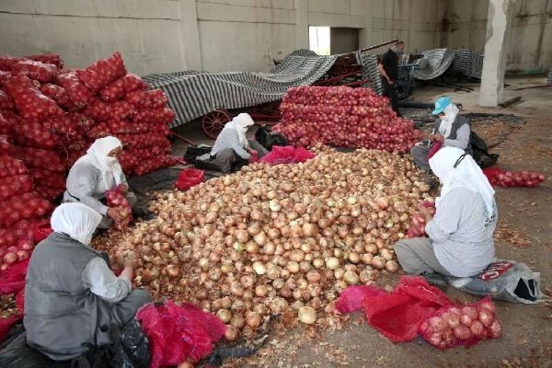 Nilüfer Belediyesi, Karacabeyli soğan üreticisine destek oldu