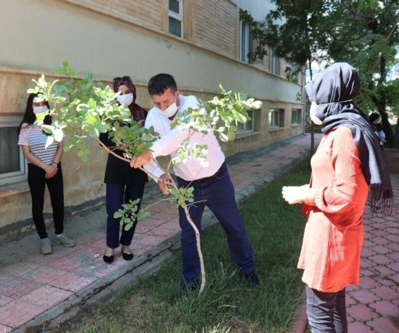 Midyat'ta kadınlara fıstık yetiştiriciliği kursu