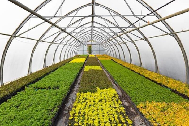 Nilüfer Belediyesi süs bitkilerini kendisi üretecek