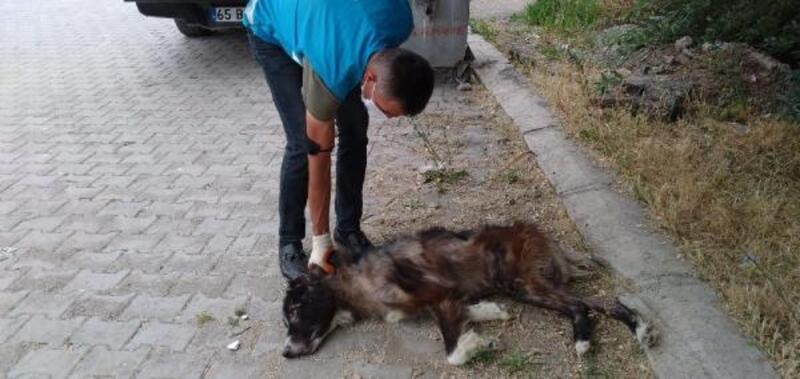 Van'da sokak hayvanlarına yönelik çalışmalar sürdürülüyor