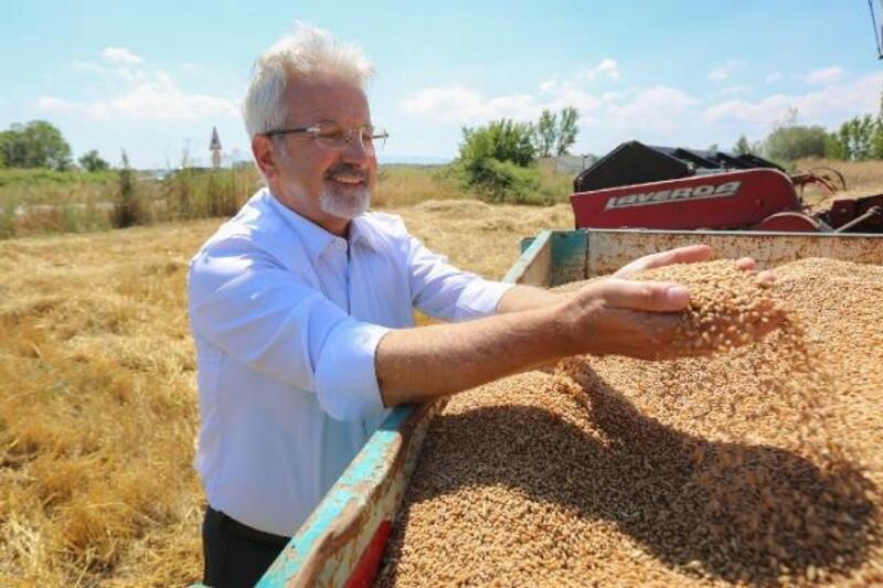Nilüfer'de buğday hasadı başladı