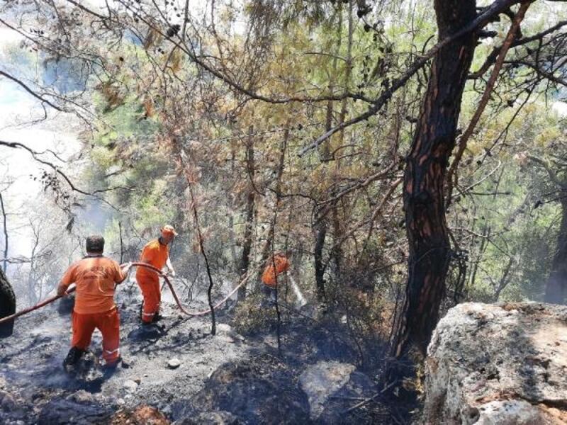 Panodan başlayan yangın ormana sıçradı