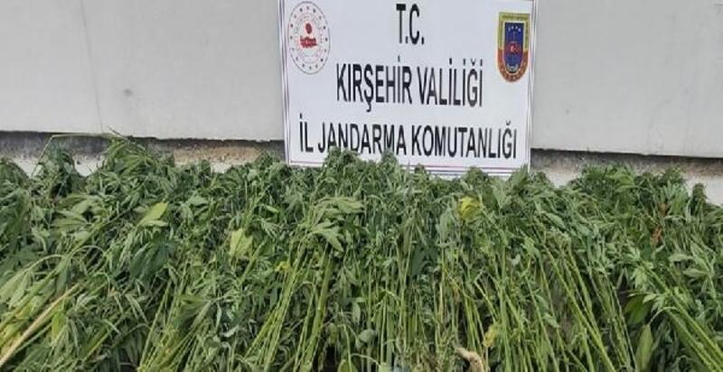 Kırşehir'de uyuşturucu operasyonu: 1 gözaltı