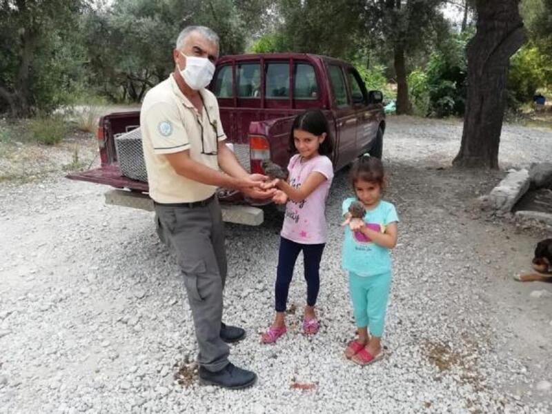Kadirli'de bulunan yavru baykuşlar korumaya alındı
