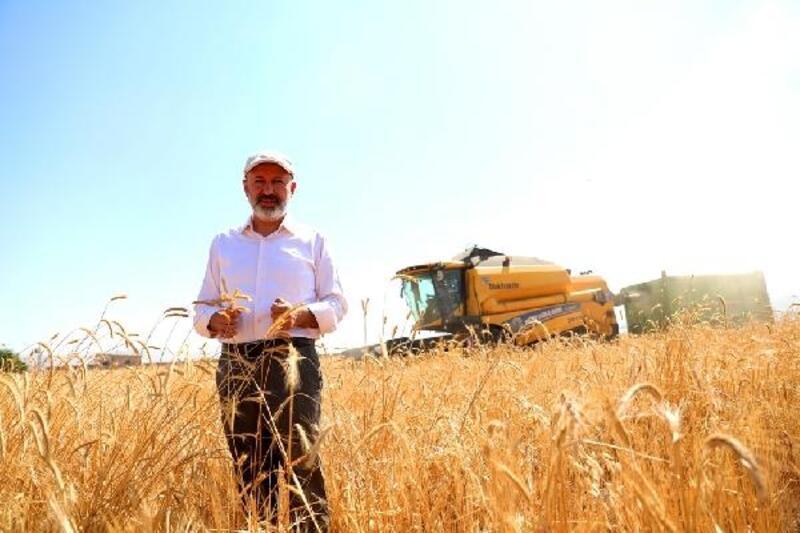 Kocasinan'da siyez buğdayının hasadı başladı