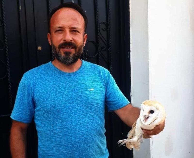 İslahiye'de öğretmenin bulduğu yaralı baykuş tedaviye alındı