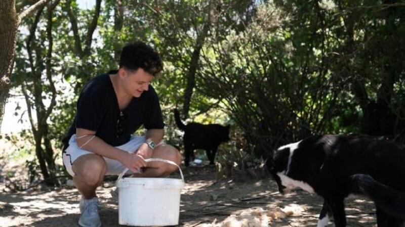 Ünlü youtuberdan Beykoz Ormanı'ndaki bini aşkın köpek için yardım çağrısı