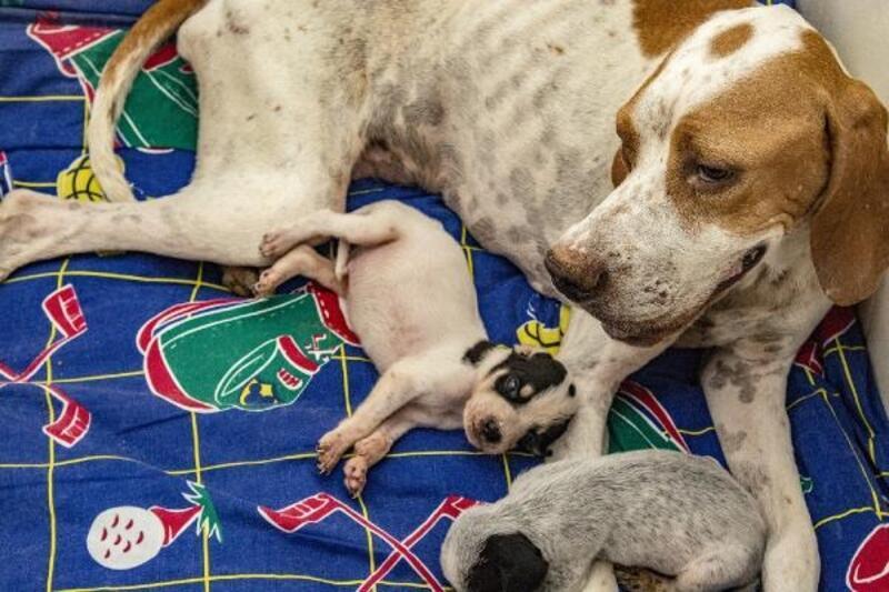 7 ayda 1580 kedi ve köpek yaralanma ihbarı yapıldı
