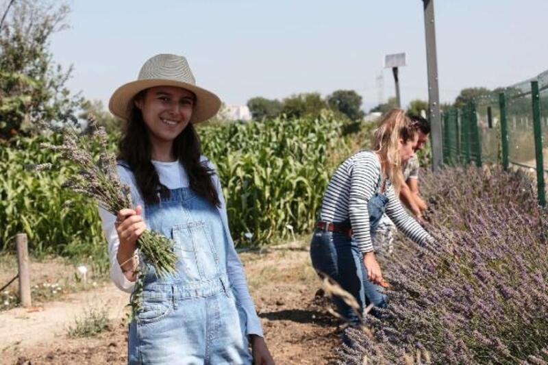 Nilüfer'de üretici lavanta üretimine teşvik ediliyor