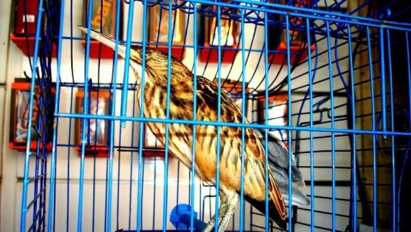 Sarıgöllü hayvansever yaralı kuşa sahip çıktı