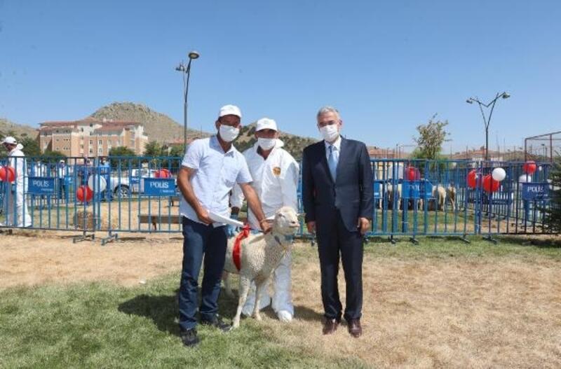Eskişehir'de 81 yetiştiriciye damızlık koç dağıtıldı