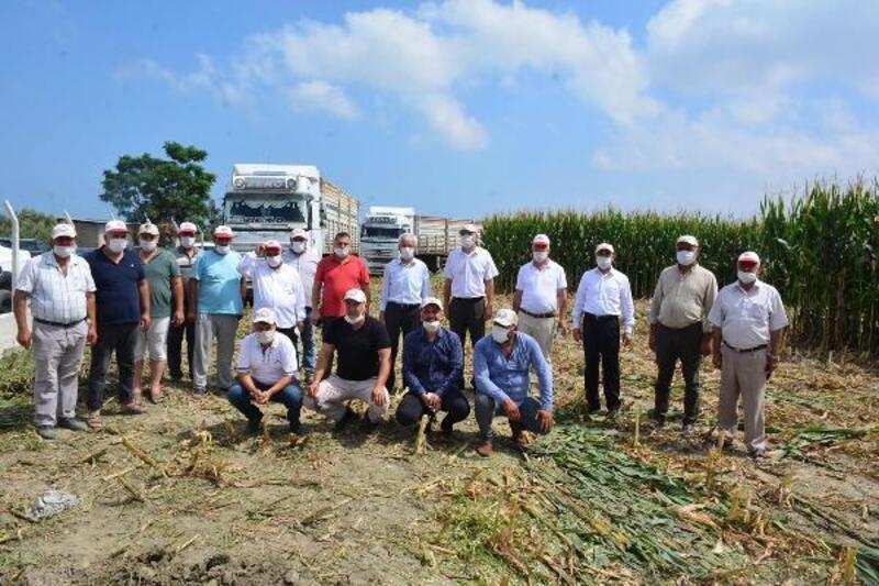 Arsuz'da mısır hasadı başladı