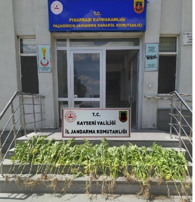 Kayseri'de 173 kök kenevir ve 50 gram kubar esrar ele geçirildi, 2 gözaltı