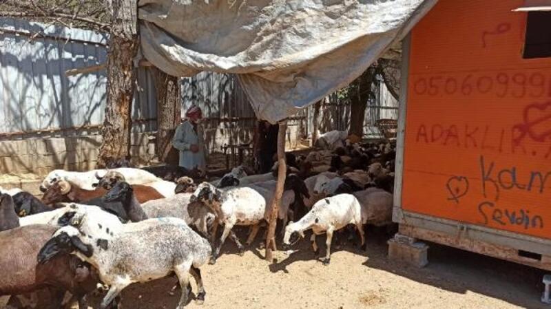 Kilis'te, besicilerin barınakları temizlettirildi
