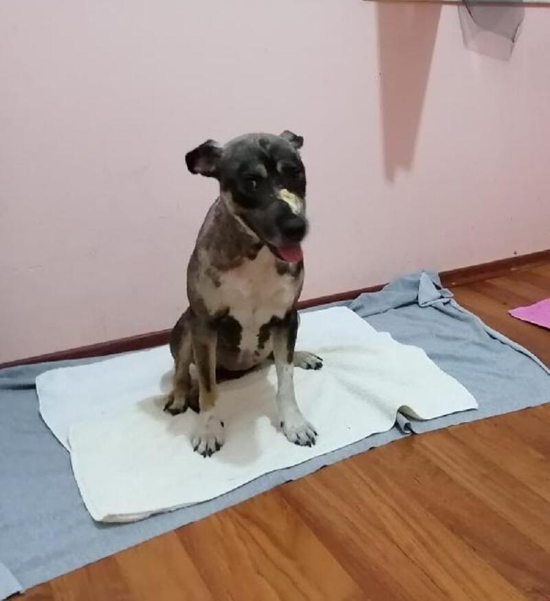 Sokak köpeği Tokyo yeni hayatına yeni ailesiyle başladı