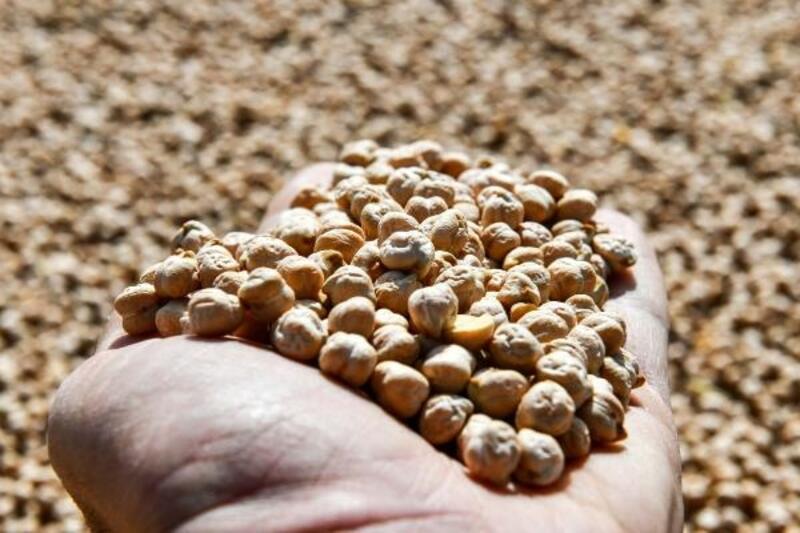 Başkent'te 'Sözleşmeli Üreticilik Projesi'nde ilk hasat yapıldı