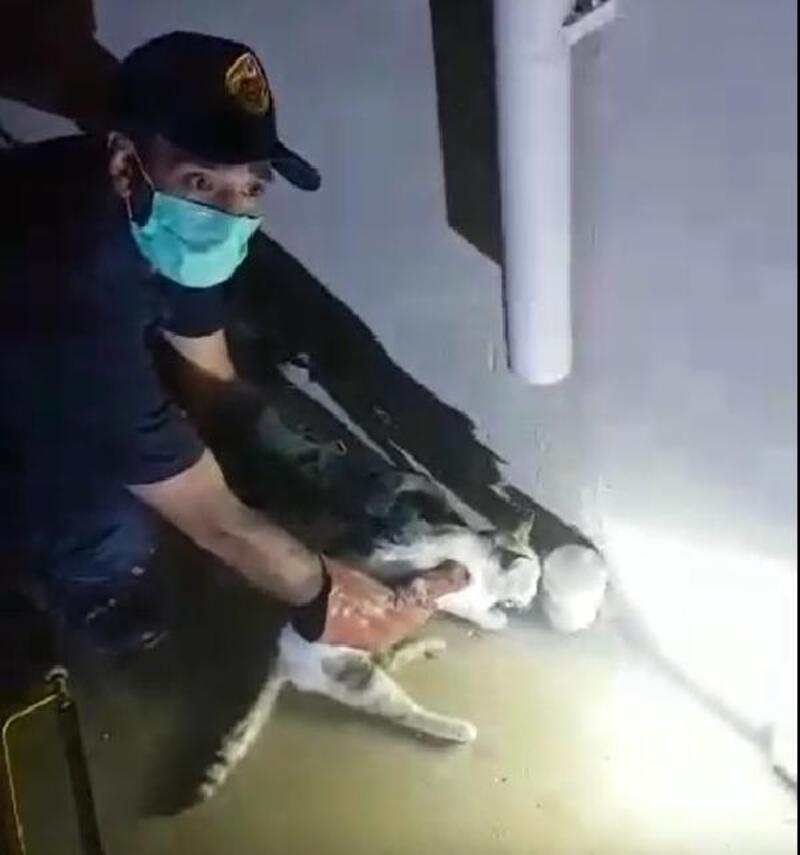 Su borusuna sıkışan kedi kurtarıldı