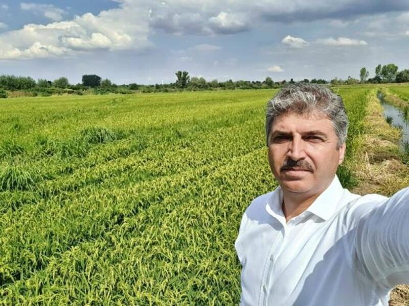 Edirne İl Tarım ve Orman Müdürü Bayazıt:'Çeltiğin gelişimi iyi'