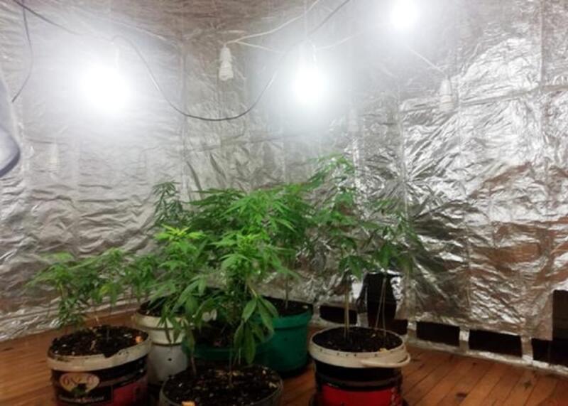 Kenevir yetiştirmek için özel oda hazırlamış