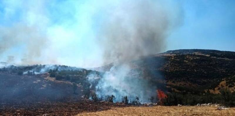 Anız yangını ormana sıçradı: 5 dönüm meşelik zarar gördü