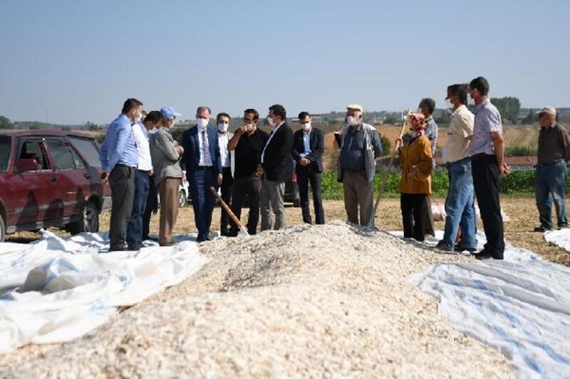 Başkan Taban, ayçiçeği hasadı yapan çiftçileri ziyaret etti