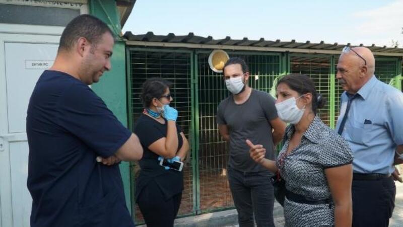 Mustafakelampaşa'daki hayvan barınağı veterinerlerden beğeni aldı