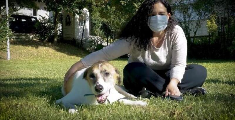 Yaşlılıktan merdiven çıkamayan köpek 'Efe' için özel kapı yapıldı
