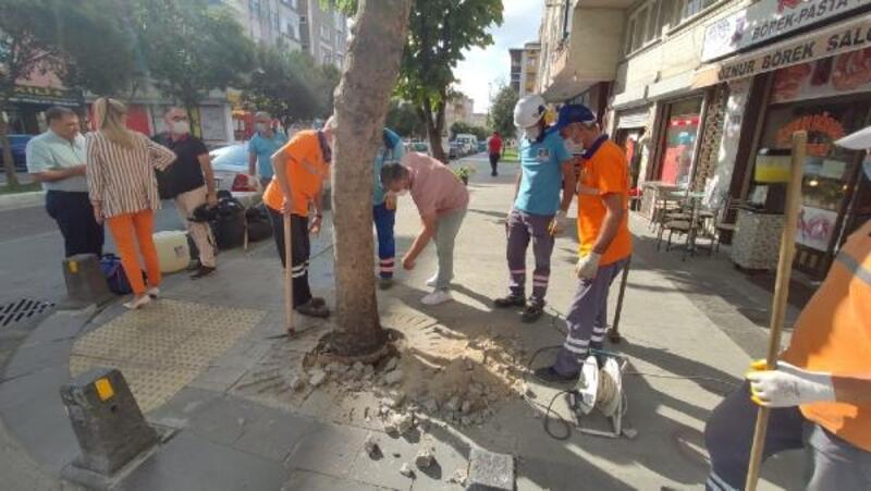 Köküne beton dökülen ağaçlar kurtarıldı
