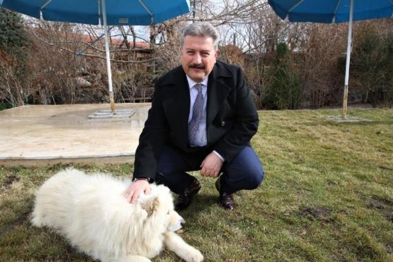 Başkan Palancıoğlu'ndan 'Hayvanları Koruma Günü' mesajı