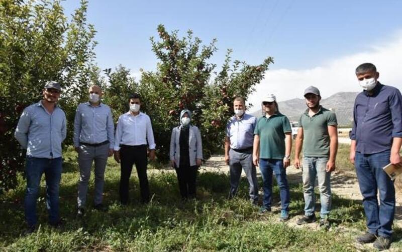 Organik elma hasadı başladı