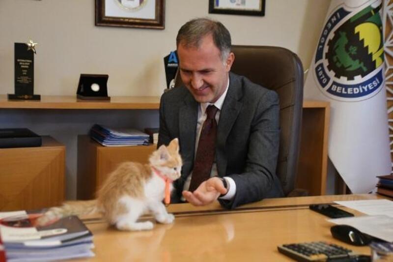 Belediye başkanı sahiplendiği kediye sosyal medya hesabından isim arıyor